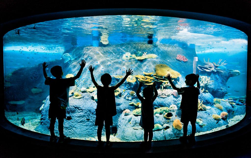 Melbourne Aquarium opening