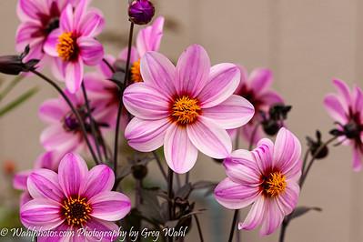 Flowers_Spring_ 2- 2019-6949
