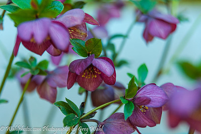 Flowers_Spring_ 2- 2019 (1 of 1)