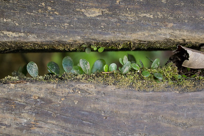 Foliage grows between bridge planks at Hiji Falls.