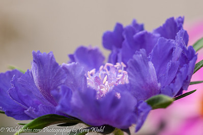Flowers_Spring_ 2- 2019-6940