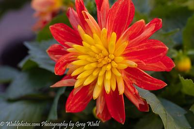 Flowers_ Mum_6730-05-16-2021 (1 of 1)