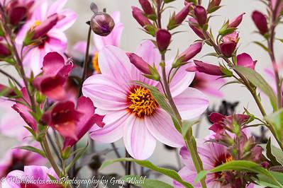 Flowers_Spring_ 2019 (1 of 1)