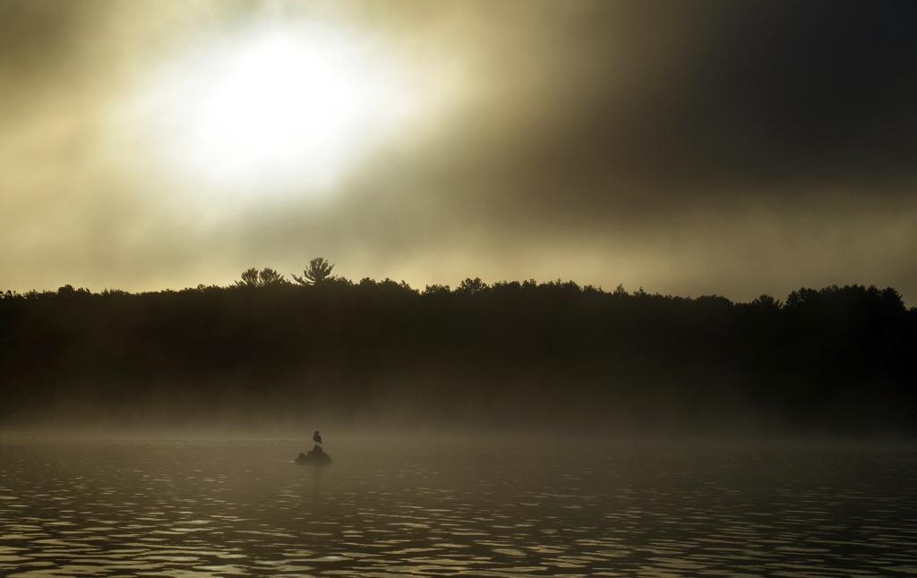 gull_fog_lowres