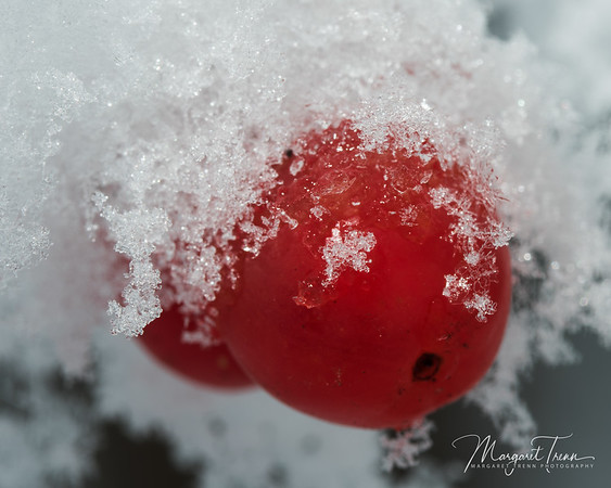 Snow Berries