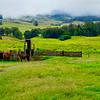 2 Horse Trail