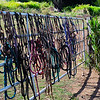 Bridle Fence