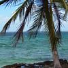 Palm Tree, DR