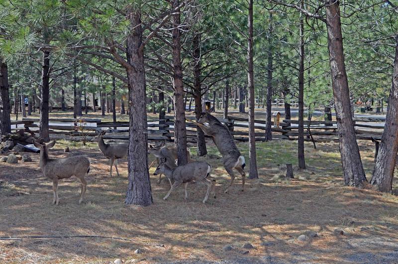 deer-caught-robbing-the-bird-feeder_DSC3773