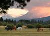 BBR horses sunset