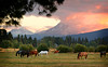 Horses sunset screensaver