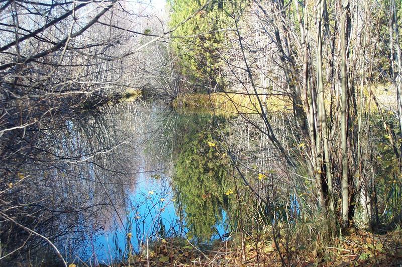 11-5 beaver pond reflections 2