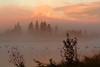Art-in-the-Aspens-sunrise-I
