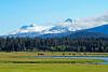 BBR-Horses-in-Meadow-N+S Sisters-KateThomasKeown_DSC7906-5000