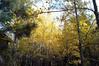 Golden grove Red Clover