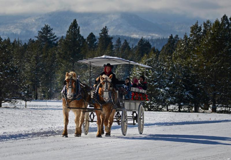 2014-carriage-rides_KateThomasKeown__KTK6061