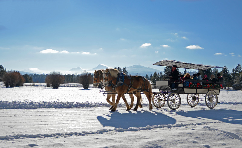 2014-carriage-rides_KateThomasKeown__KTK6074