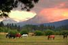 horses sunset 091305MASTER 080306_8313 12x18