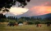 BBR horses sunset 091305-_8313_ktk