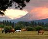 horses sunset 8x10 092106 MASTER 080306_8313NR