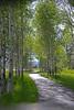 aspen grove DSC_4630 copy