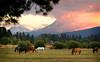horses sunset_8313