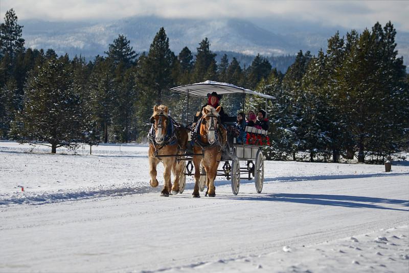 2014-carriage-rides_KateThomasKeown__KTK6060_1