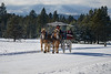 2014-carriage-rides_KateThomasKeown__KTK6060_1