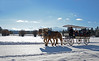 2014-carriage-rides_KateThomasKeown__KTK6074_1