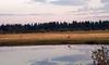 82202 heron fishing