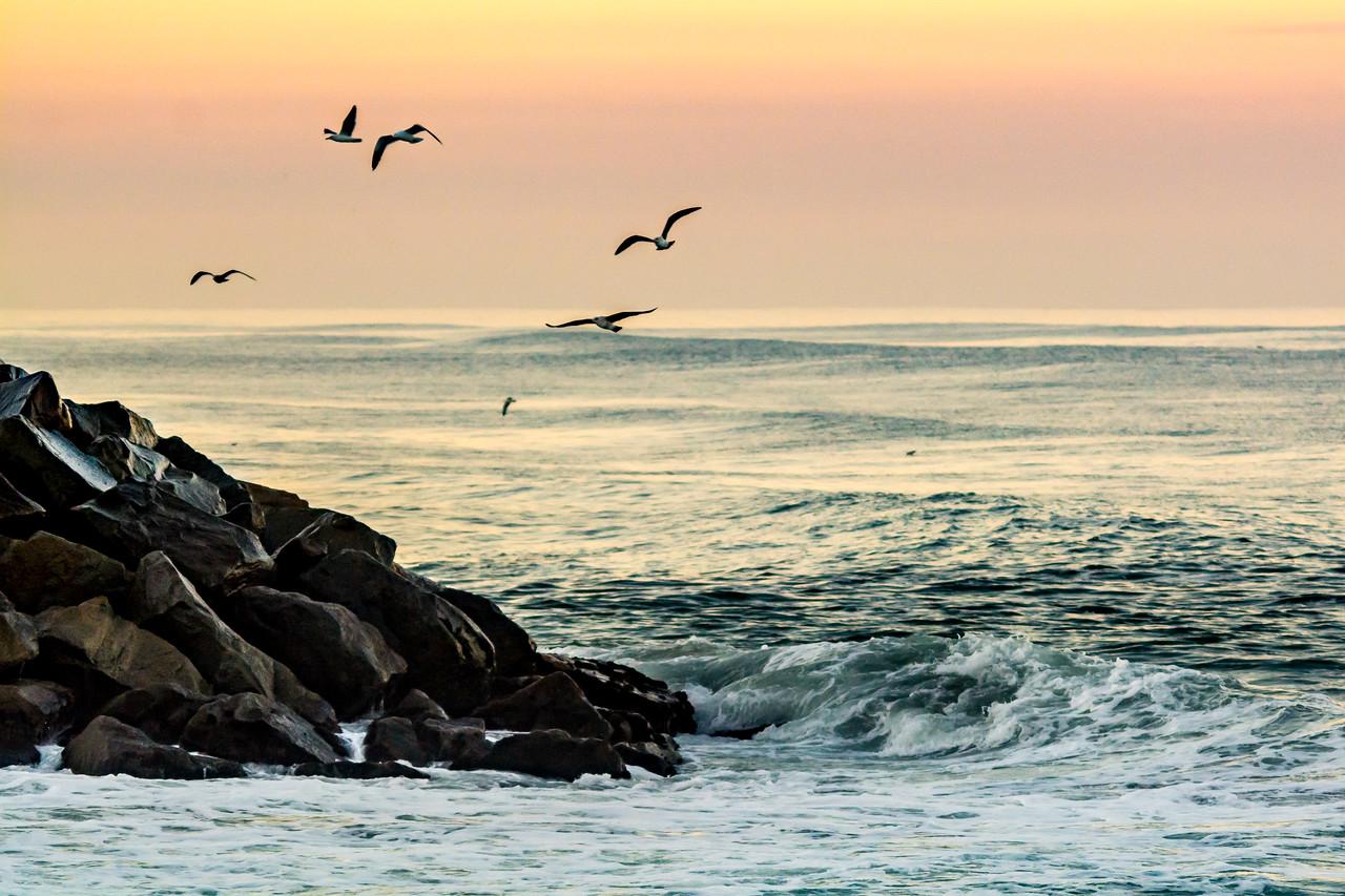 Pre-sunrise Gulls