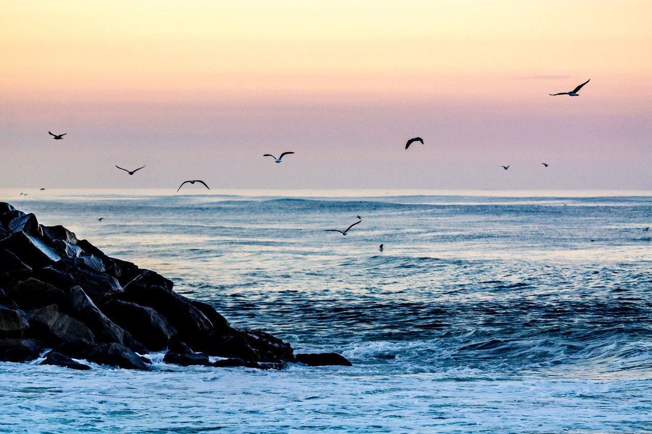 Ponto Beach Gulls at Dawn