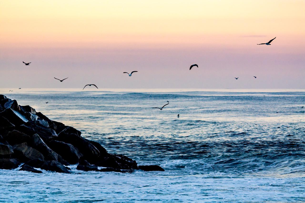 Ponto Beach Gulls at Dawn