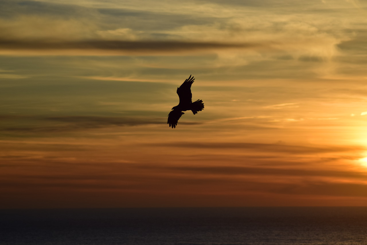 Osprey Sunset
