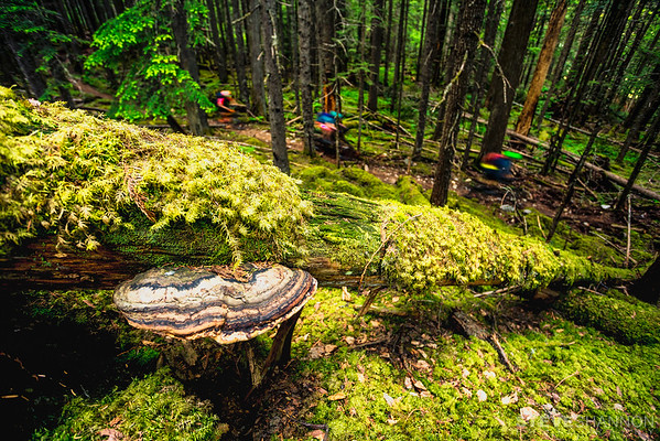 The lush interior rain forest of Revelstoke, BC.