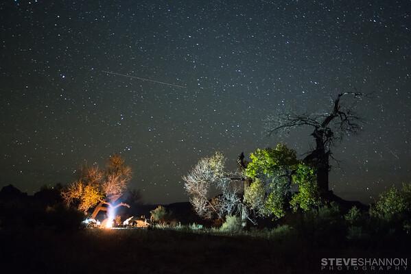 SteveShannonPhoto_20141112_8797