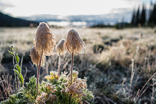 SSP_FROST_20160904_0010