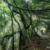 Fleur Simons descends through the jungle on La Palma.