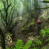 Fleur Simons descends through the jungle on La Palma.  Location: La Palma, Canary Islands, Spain.  Athlete: Fleur Simons.