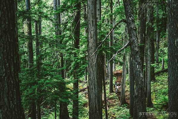 Athlete: Terry Dufloth<br /> Location: Revelstoke, BC<br /> The lush interior rain forest is the perfect backdrop for some enduro riding.  Home to some of the most progressive and best managed singletrack in the country, Revelstoke should be on every riders' hit list.
