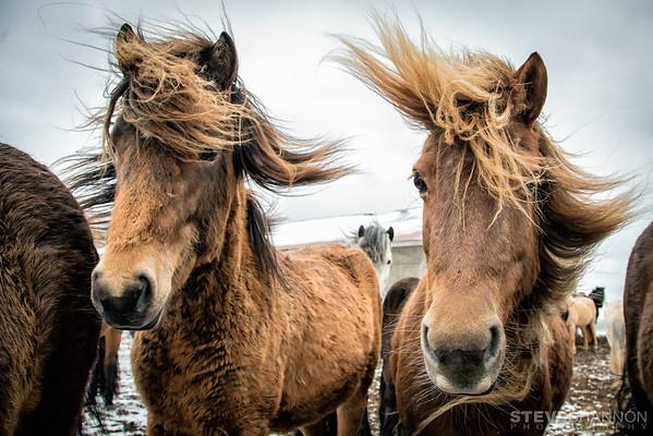 SSP_ICELAND_20160428_1616-Edit