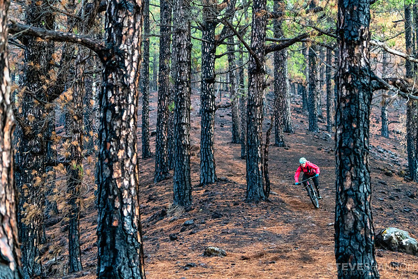 Emily Slaco rides through a burnt forest on La Palma.