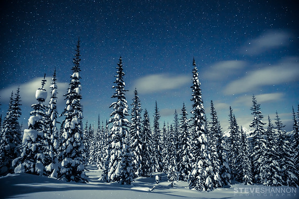 Snowy evergreens create an ethereal scene under a starry winter night in the Selkirk mountains of British Columbia.