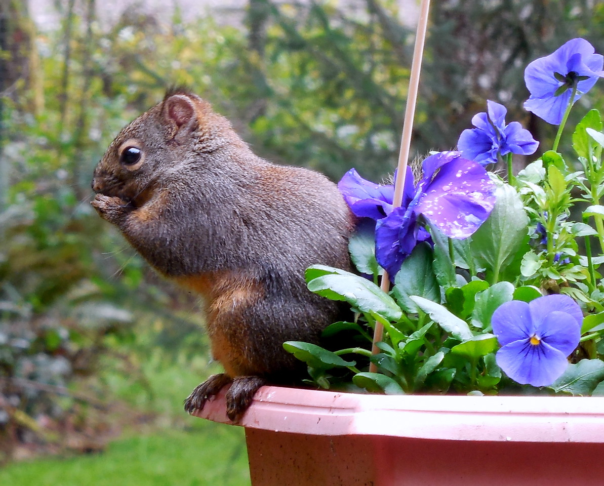 Squirrel Garden