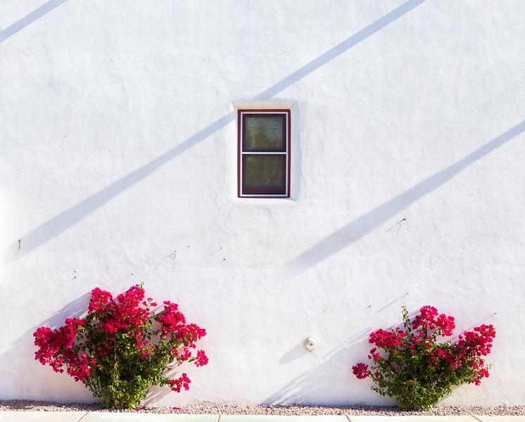 White Wall Tucson 2015