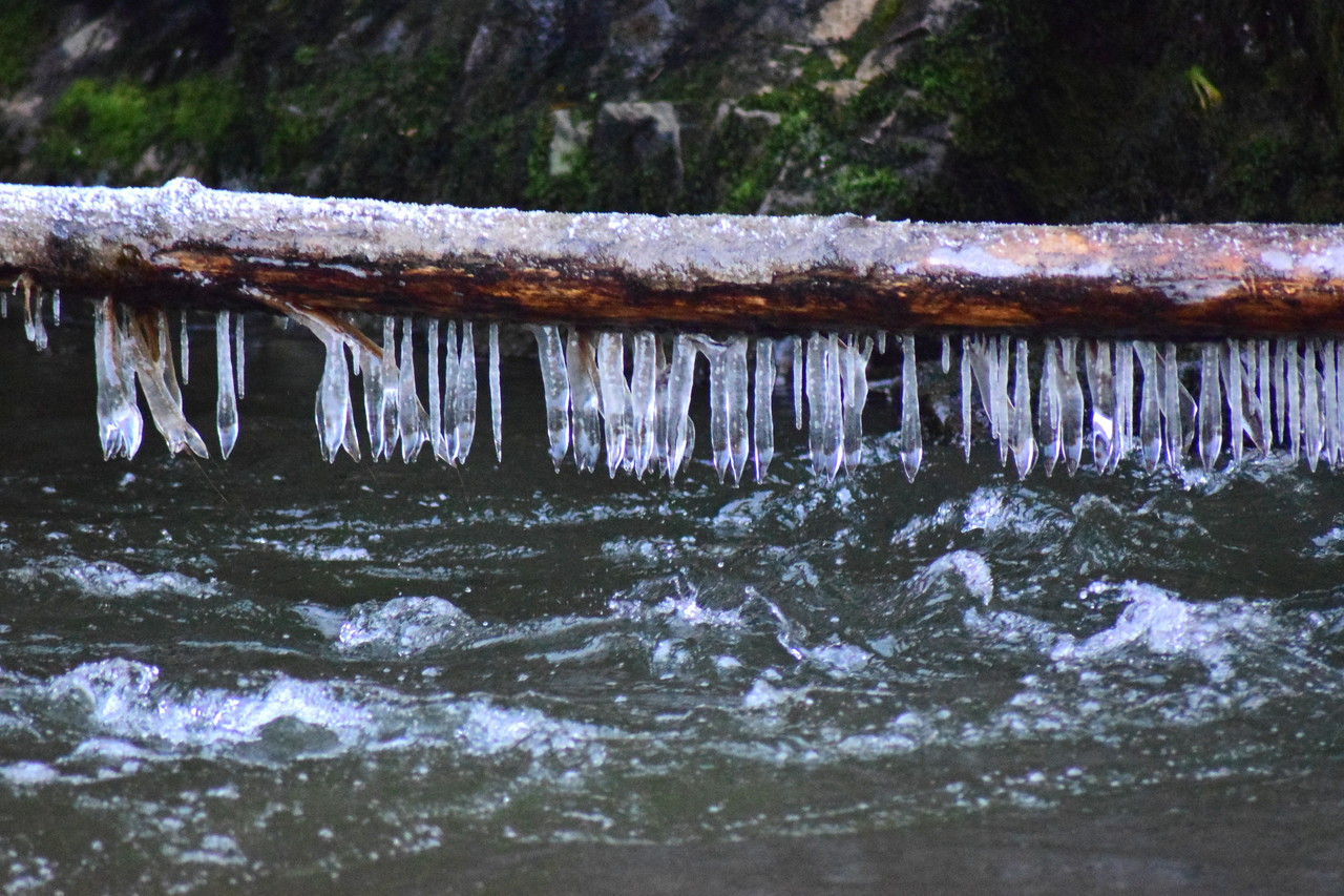Icy Log Over the Puyallup River