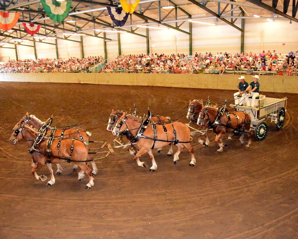 Draft Horse Exhibition