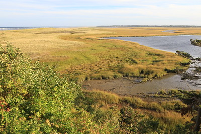 Looking west over one of the Cape's beautiful marshes.