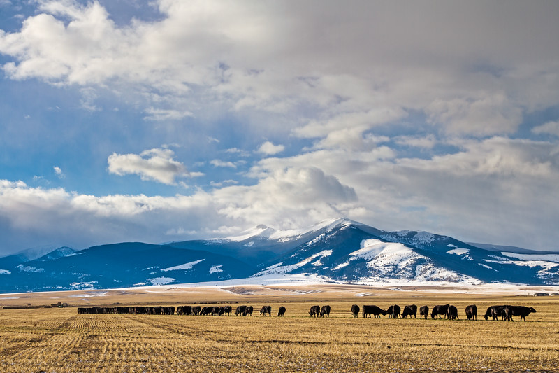 Montana Chorus Line - Deer Lodge, Montana