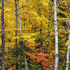Fall Color in Pictured Rocks National Lakeshore
